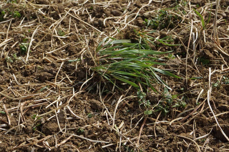 brevigleri Bodenfräse Feld